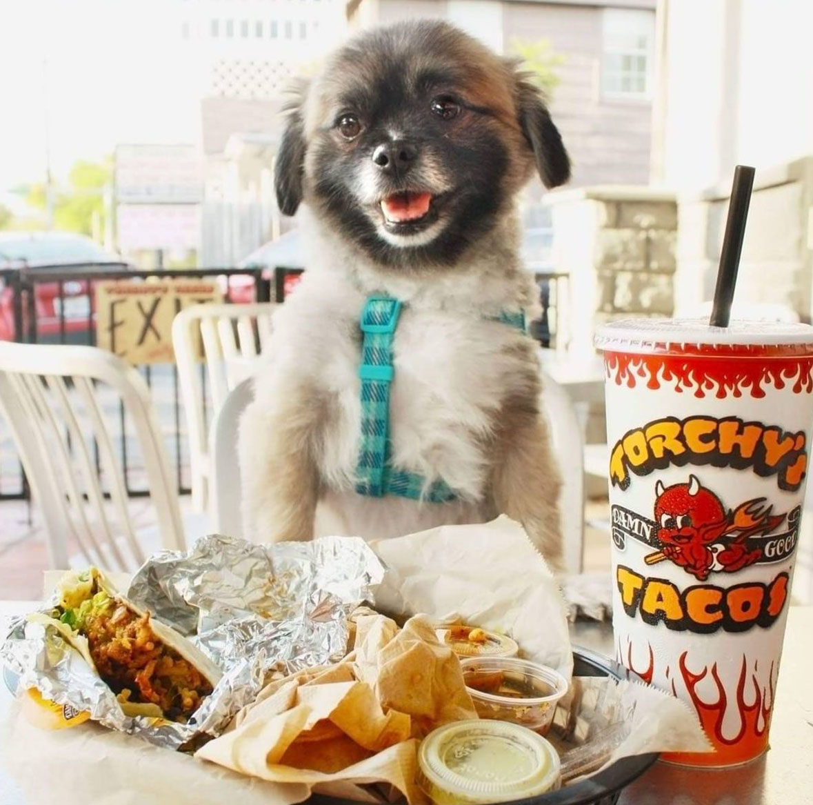 cute dog about to eat tacos